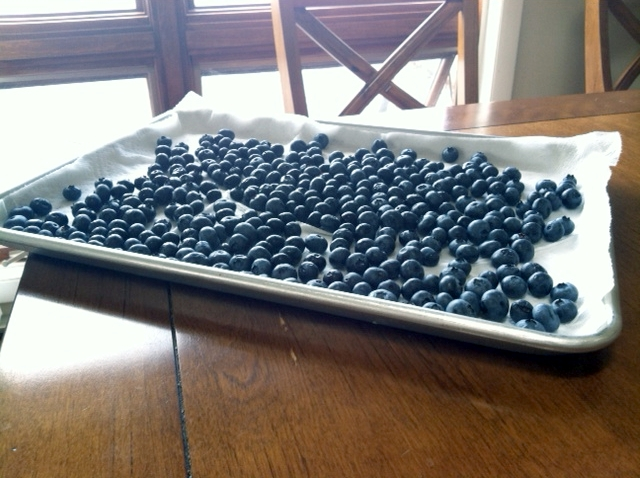 blueberry tray